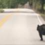 Black bears seen roaming around middle Tennessee counties
