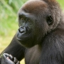 Riverbanks Zoo mourning loss of infant gorilla