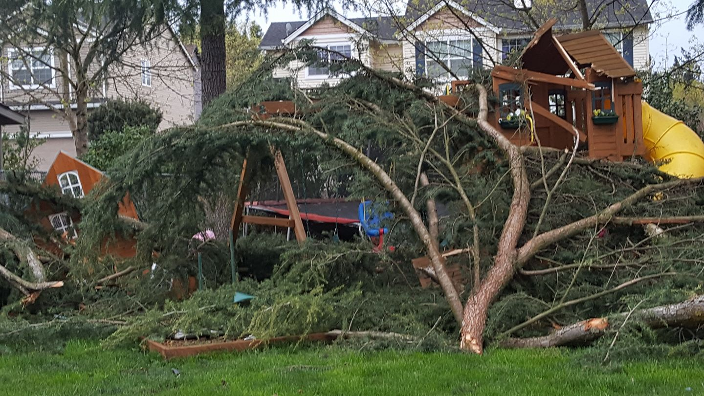 tree down in Milwaukie Oregon - Cindy Conner-Mertz.jpg