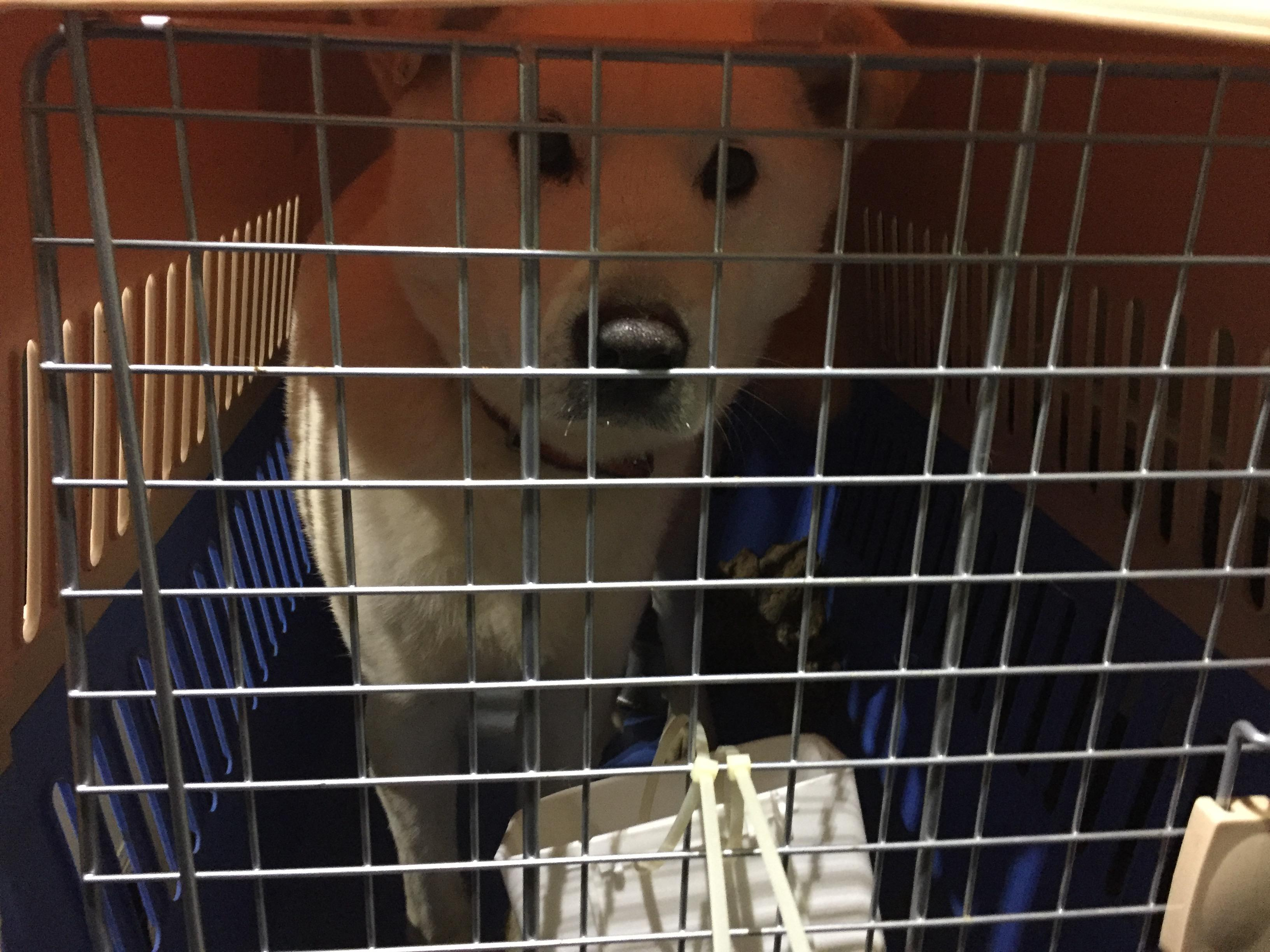 Gus in airplane crate. (Photo courtesy of Cari Tetzlaff)