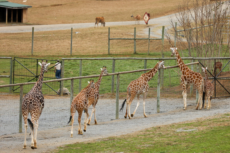 Visitors can also feed giraffes at the walk-through zoo portion. (Amanda Andrade-Rhoades/DC Refined)<p></p>
