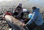 Cold weather likely kills sharks along Cape Cod coast