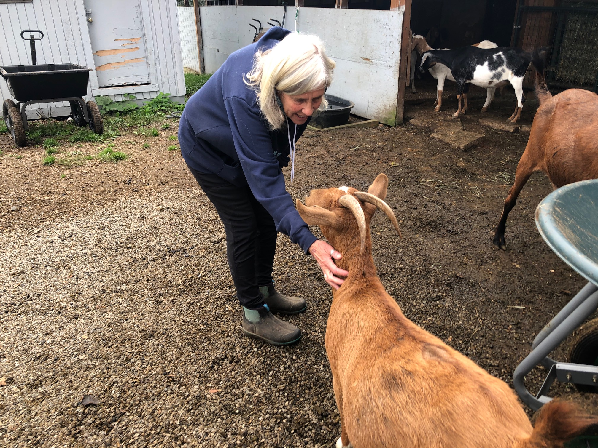 Barbara Jamison started Puget Sound Goat Rescue in 2001. The charity is 100% run by volunteers. (Image: Seattle Refined)