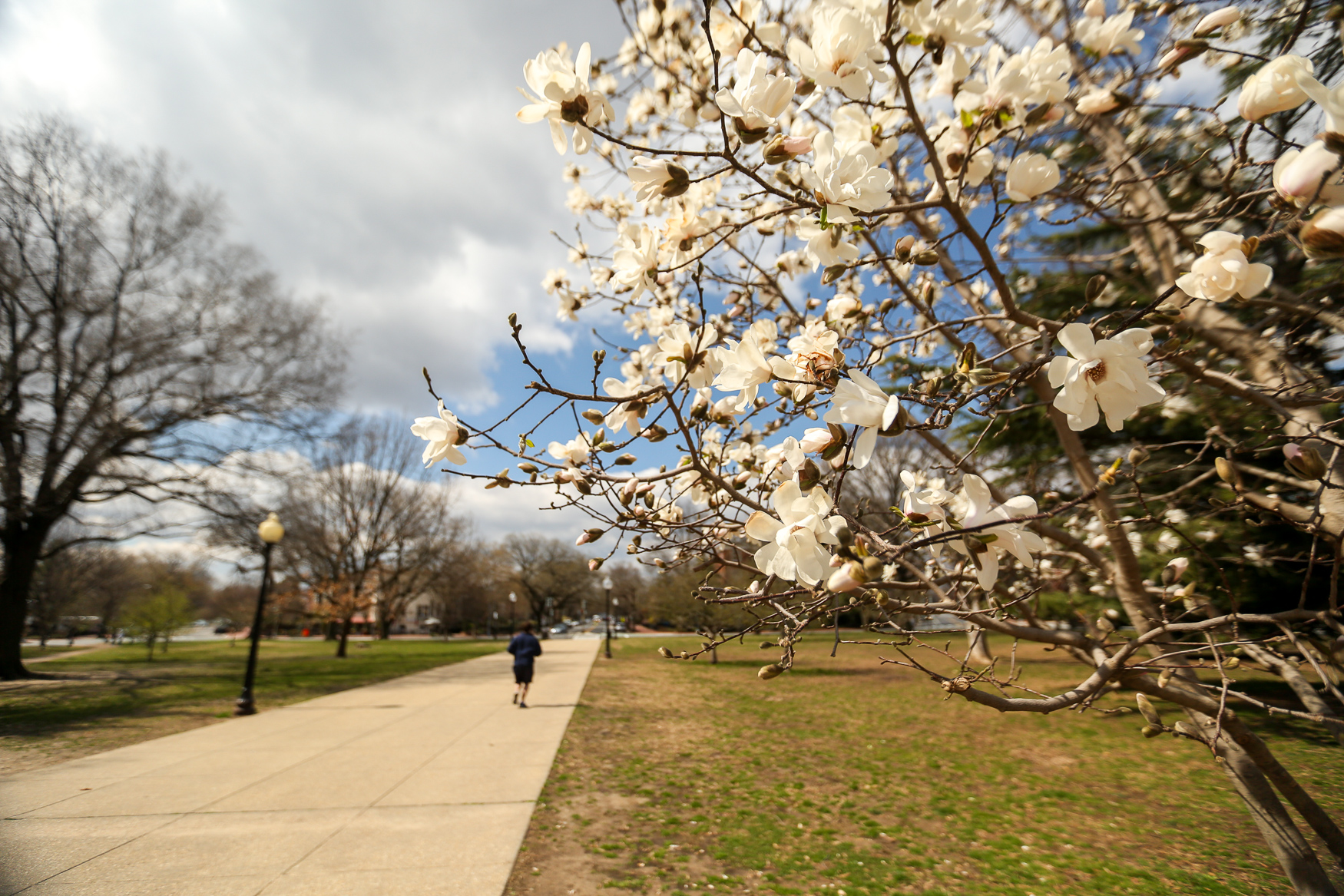 Between Capitol Hill and Lincoln Park, Hill East is full of blooming or soon-to-bloom trees! The around around The Hill in particular has tons of cherry blossoms, so it's an exceptionally picturesque spot if you also want to catch a glimpse of a D.C. landmark. (Amanda Andrade-Rhoades/DC Refined)