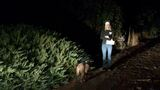 Mountain lion or dog? Mysterious animal walks through KUTV live shot