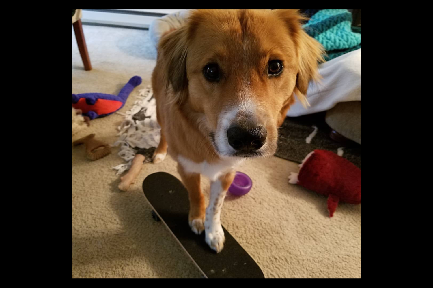 Darrel taught himself to skate on tiny skateboard (Image: Hailey Adair)