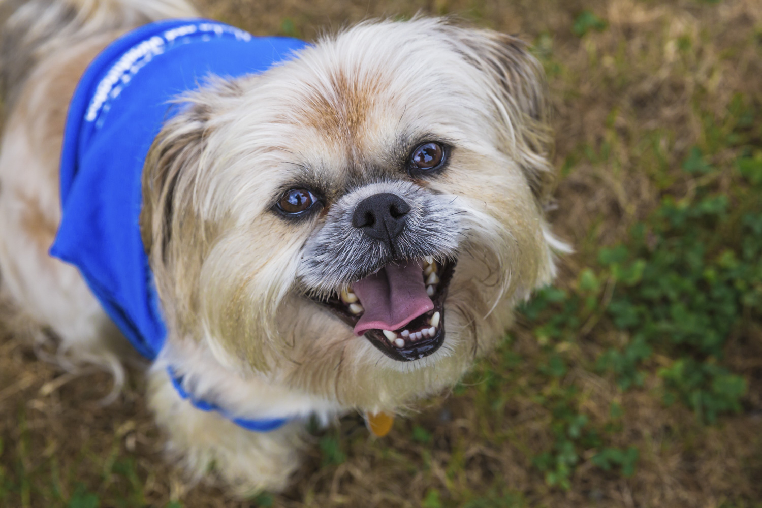 <p>Meet, Elvis! Elvis is a 5-year-old Shih Tzu who is living the dream here in Seattle. He loves people, especially kids and doesn't like crow or squirrels.{&amp;nbsp;}The Seattle RUFFined Spotlight is a weekly profile of local pets living and loving life in the PNW. If you or someone you know has a pet you'd like featured, email us at hello@seattlerefined.com or tag #SeattleRUFFined and your furbaby could be the next spotlighted! (Image: Sunita Martini / Seattle Refined).</p>