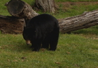 SPRINGTIME BEAR INCIDENTS_0002_frame_9629.jpg