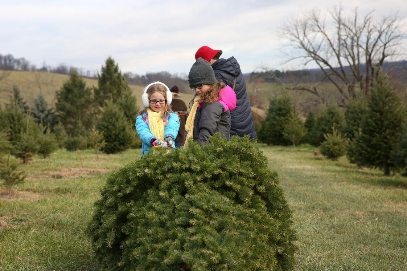 Snickers Gap Christmas Tree farm is a  family owned choose-and-cut Christmas tree farm located near Bluemont, Virginia.(Amanda Andrade-Rhoades/DC Refined)